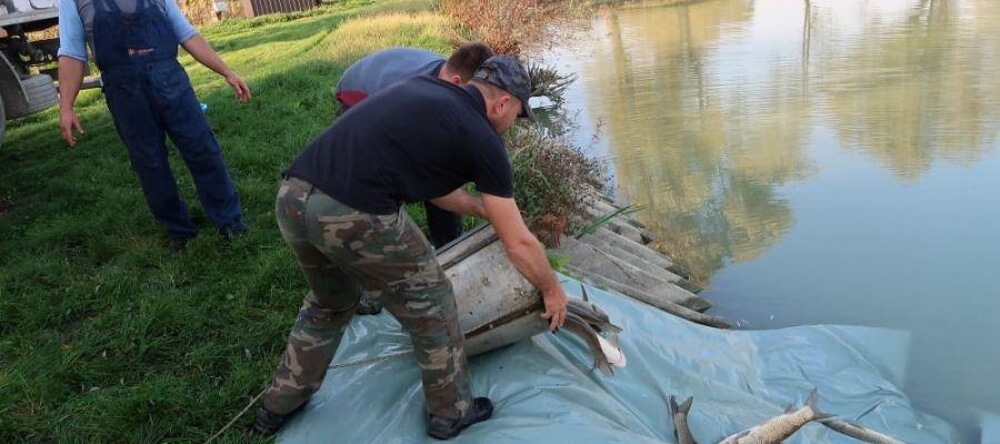 ribe i druženje organiziranje noći za brza druženja